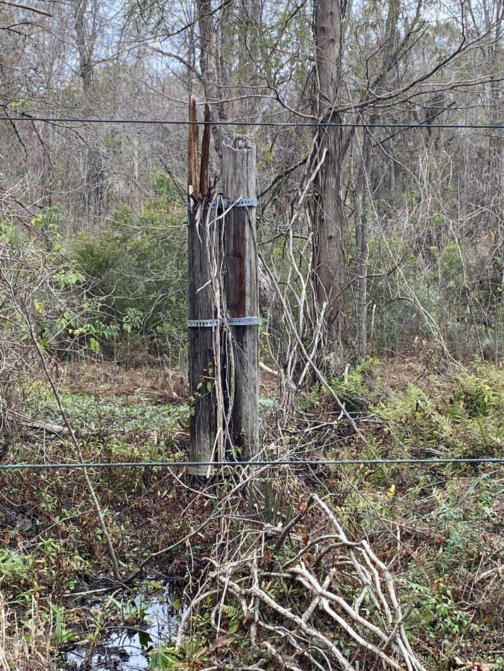 Soaring-Eagle-Vegetation-Management